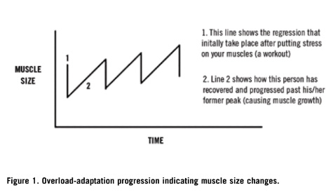 Endurance Training Program Design [ARTICLE] – Coaches Insider